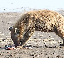 Spotted Hyena with Prey by Carole-Anne