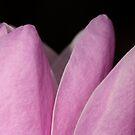 à fleur de peau by yvesrossetti