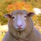 I Have My Winter Coat All Sorted... - Sheep - NZ by AndreaEL