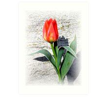 Easter Tulip Art Print