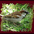 Male House Sparrow by ArtOfE