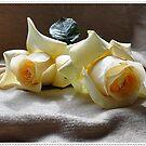 Rosas Té... by cieloverde