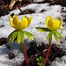 Spring couple by Irina777