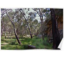 Dandry Gorge Walk - Pilliga Poster