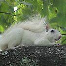 White Squirrel 02 by FandomsFriend