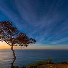 Tree by the sea by Ralph Goldsmith