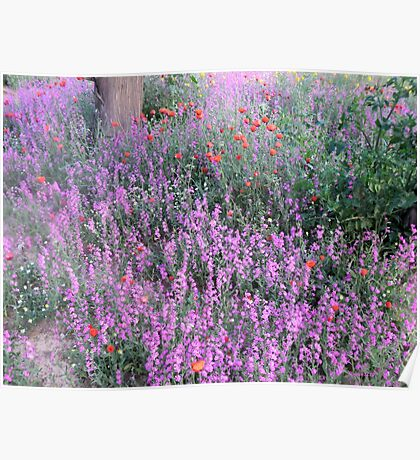 Spring Field Flowers Poster