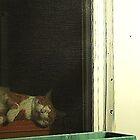 Beware Of Cat by Mistyarts