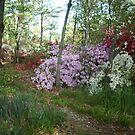 Azelea Garden - my backyard by AJ Belongia