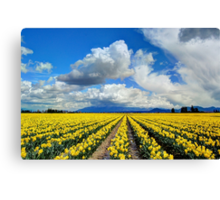 Blanket of Sunshine - Daffodil Fields 1 Canvas Print
