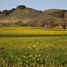 Spring in Santa Ynez by Renee D. Miranda