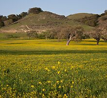 Spring in Santa Ynez by Renee D. Miranda