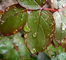 Rain in April by Ana Belaj