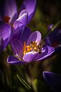 FIRST SIGNS OF SPRING by Sandy Stewart