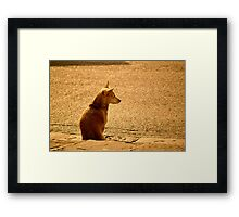 il Cane Framed Print