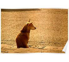 il Cane Poster