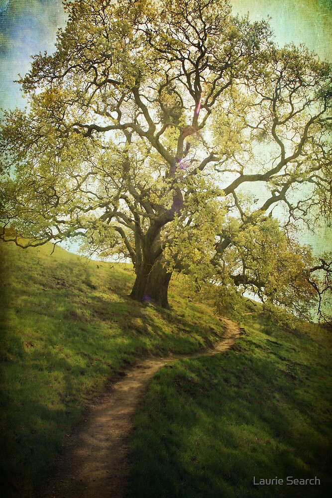 The Path to Brighter Days by Laurie Search