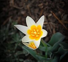 White Flower by Jacob Freeman