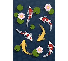 Japanese Koi Fish Pond Photographic Print