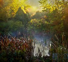 Glorious Morning by Robin Webster