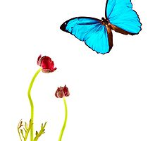 Blue Butterfly by Cheryl Vorhis