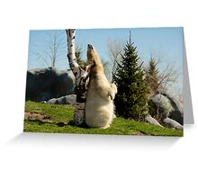 Scratch That Itch! Greeting Card