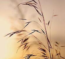 Golden by Paul Finnegan