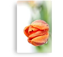 Sweet, but with a little attitude... (2) Canvas Print