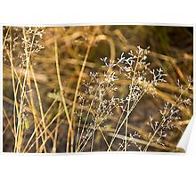Frosted Grass Poster