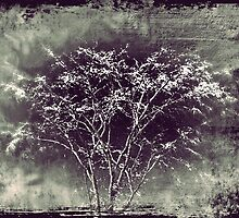 Surrealistic Tree by MissDawnM