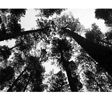 Trees look up Photographic Print