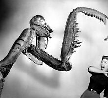 Mantis Attack! by TexasBarFight