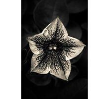 Starlight Photographic Print