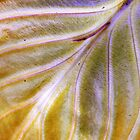Hosta leaf ~ end of season by Laurie Minor
