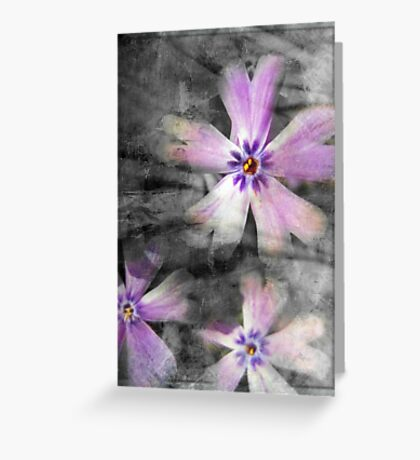 Phlox Greeting Card