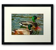 Mallards On the Pond Framed Print