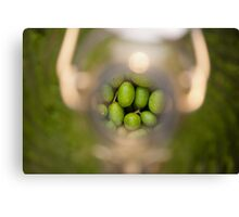 Olives in a bottle Canvas Print