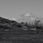 Mt Buffalo high plains by Adrian Cusmano