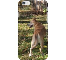 Dogs day out iPhone Case/Skin