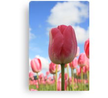 Tulips and the Sky Canvas Print