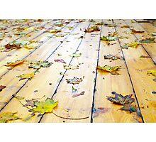 Selective focus on wet fallen autumn maple leaves closeup Photographic Print