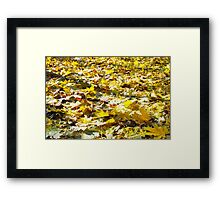 Selective focus on the yellow fallen autumn maple leaves Framed Print