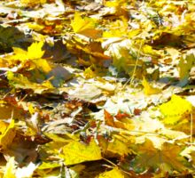 Selective focus on the yellow fallen autumn maple leaves Sticker