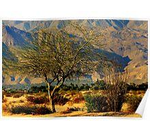 Palm Desert, Lone Tree & Mountains Poster
