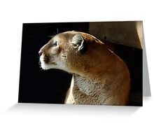 Eiger the Cougar Greeting Card