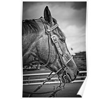 Bridle And Buckle Poster