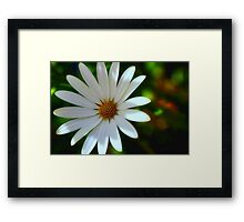 In Your Face.... Framed Print