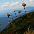 Mt Buller Buds by D-GaP