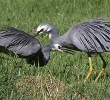 Heron Happiness by Phillip Weyers