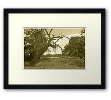 The Wallis Tree Framed Print